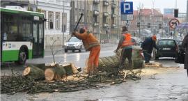 Można sobie kupić drewno opałowe i to od Miasta Białystok