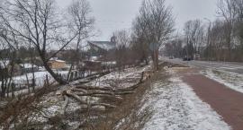 Zielone ofiary przebudowy Ciołkowskiego