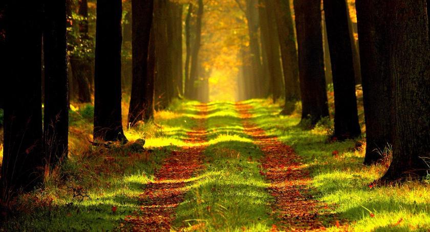 zieleń, dofinansowała hektarów Targówka - zdjęcie, fotografia