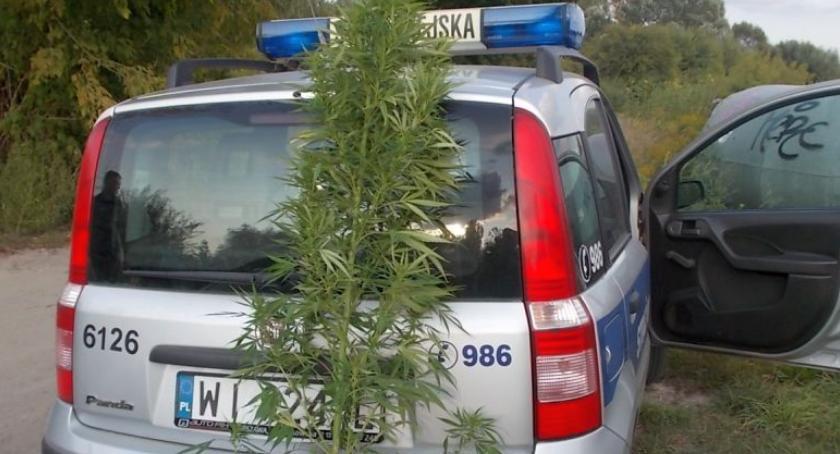Targówek, Straż miejska odkryła nielegalną plantację marihuany - zdjęcie, fotografia