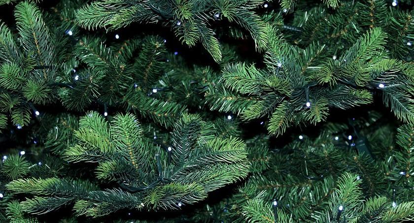 zieleń, Rusza akcja CIEPŁO NATURY oddajemy choinki recyklingu - zdjęcie, fotografia