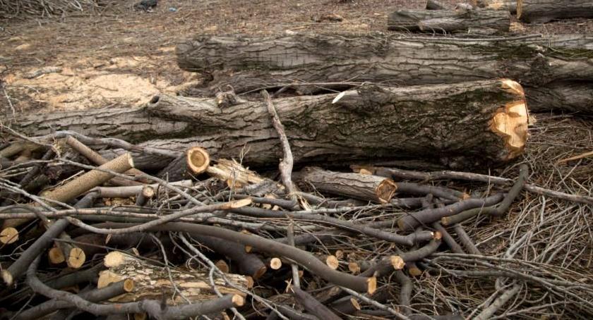 zieleń, Wycinka drzew Parku Bródnowskim - zdjęcie, fotografia