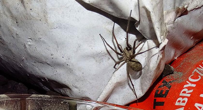 zwierzęta, Lucek pająk Targówka - zdjęcie, fotografia