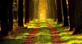 Unia dofinansowała 10 hektarów lasu dla Targówka