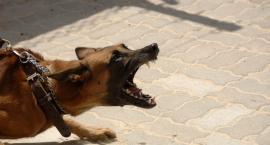 Agresywny pies i jego właścicielka. Pani została zatrzymana