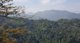 Sri Lanka- herbaciana wyspa