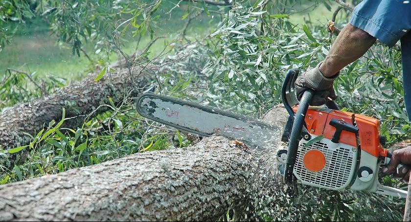 Komunikaty, Usuwanie drzew krzewów - zdjęcie, fotografia