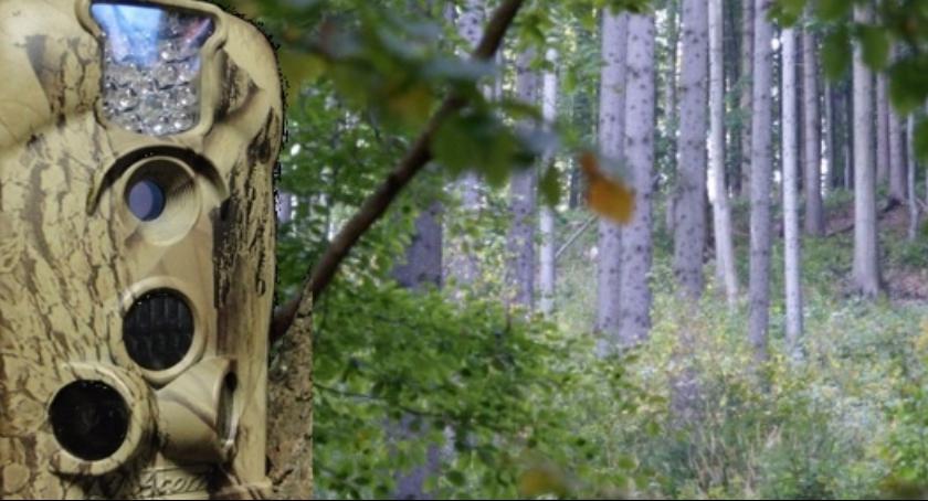 Komunikaty, Klembów pułapki lasach terenie gminy - zdjęcie, fotografia