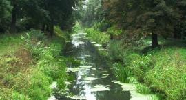 Sprzątanie rzeki Czarnej
