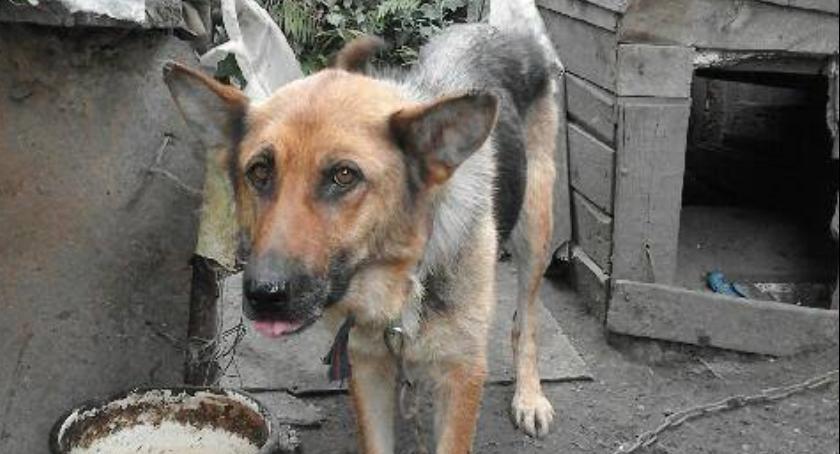 Kronika kryminalna, Mordercy psów Grochowalska pójdą więzienia - zdjęcie, fotografia