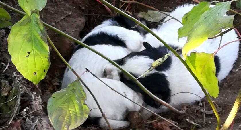 Komunikaty i profilaktyka, Policjant przygarnął opuszczone szczeniaki - zdjęcie, fotografia