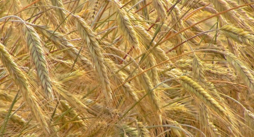 Uprawy, Chronić rośliny szkodzić - zdjęcie, fotografia