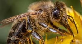 Pszczelarze biją na alarm