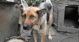 Mordercy psów z Grochowalska pójdą do więzienia?