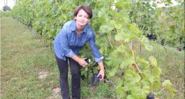 Winnica w sercu powiatu