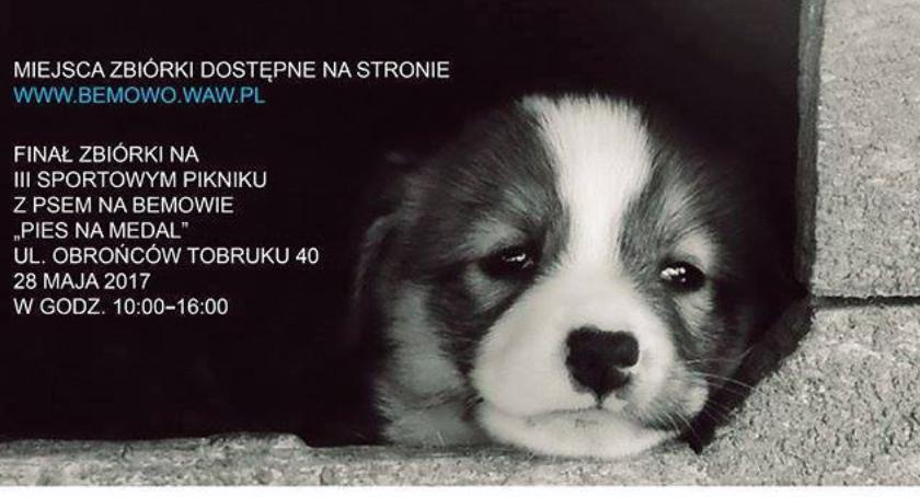 Zwierzęta, Pomóżmy zwierzętom schroniska!!! - zdjęcie, fotografia