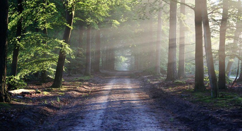 Zieleń, lasowi bemowskiemu grozi zniszczenie - zdjęcie, fotografia
