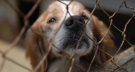 Psy będą czekały na nowych właścicieli w Parku Skaryszewskim