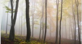Zwłoki kobiety w Lesie Bielańskim, co wydarzyło się tam tak naprawdę?