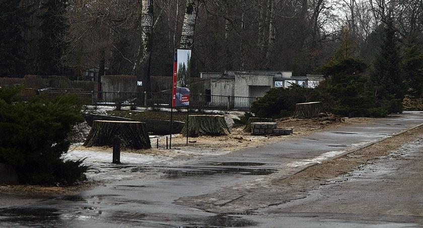 News, wycina drzewa - zdjęcie, fotografia