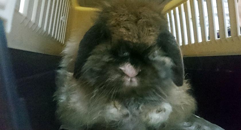 Interwencje, Zabłąkany królik - zdjęcie, fotografia