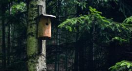 """Piknik ekologiczny """"Budki dla ptaków – Eko Miasto"""" [PROGRAM]"""