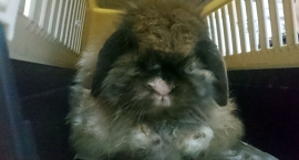 Zabłąkany królik
