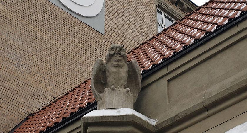Zwierzęta Śródmieścia , ulicy Dobrej - zdjęcie, fotografia