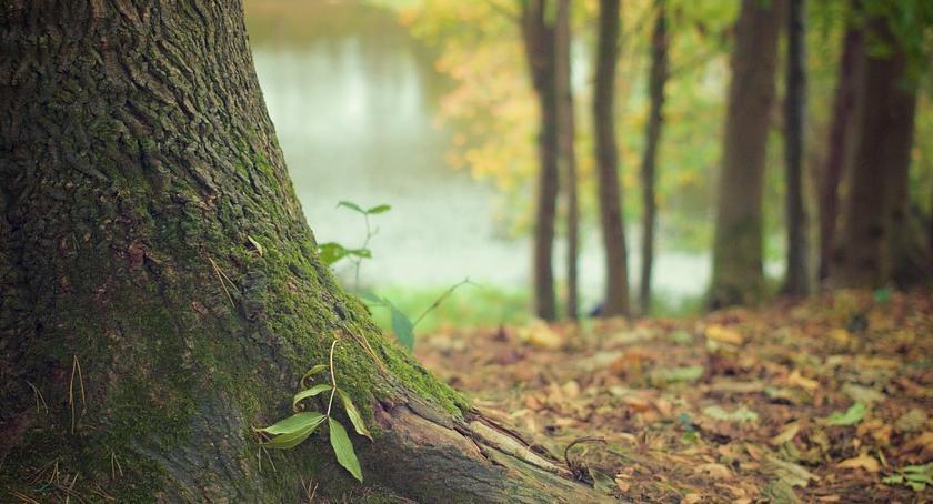 Bezpieczeństwo, Radny Piotr Guział sprawie wycinki drzew między Mostem Poniatowskiego linią kolejową - zdjęcie, fotografia