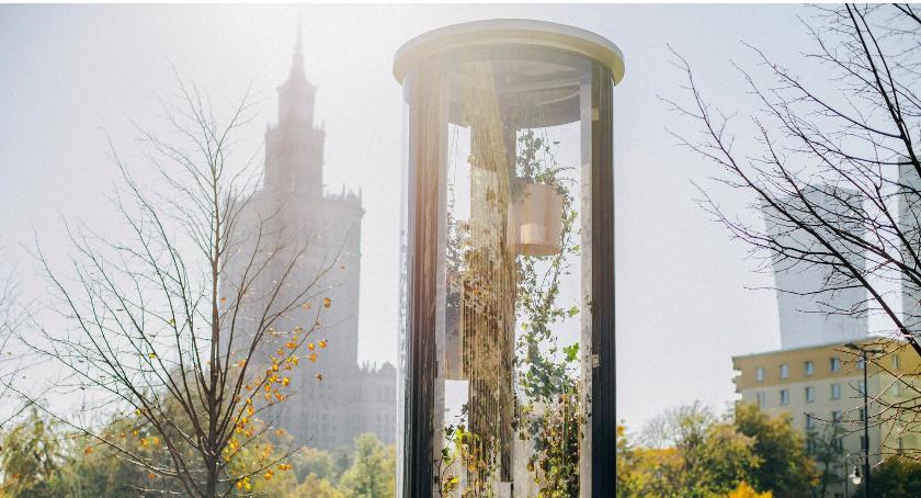 Zieleń, Palmiarnia warszawskich ulicach tęsknoty latem - zdjęcie, fotografia