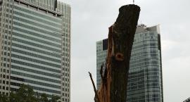 Twoje drzewo na pl. Grzybowskim 25. Finał Wielkiej Orkiestry Świątecznej Pomocy