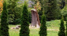 Wycinanie drzewa na terenie szpitala