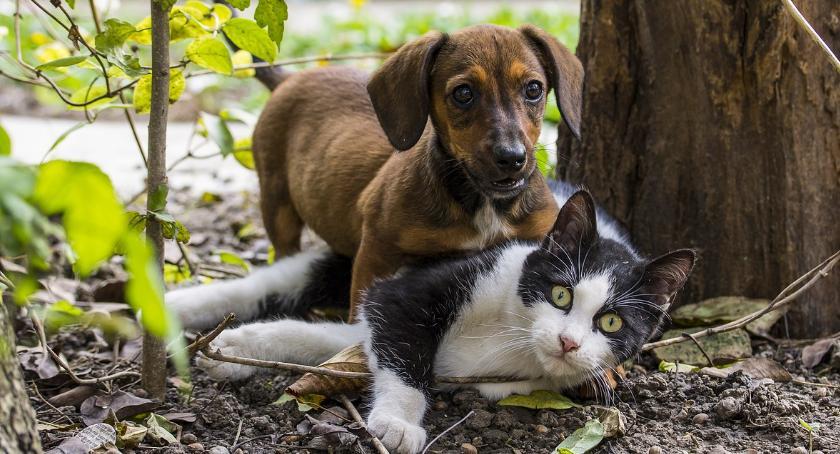 Zwierzęta, Bezpłatny twojego pupila - zdjęcie, fotografia