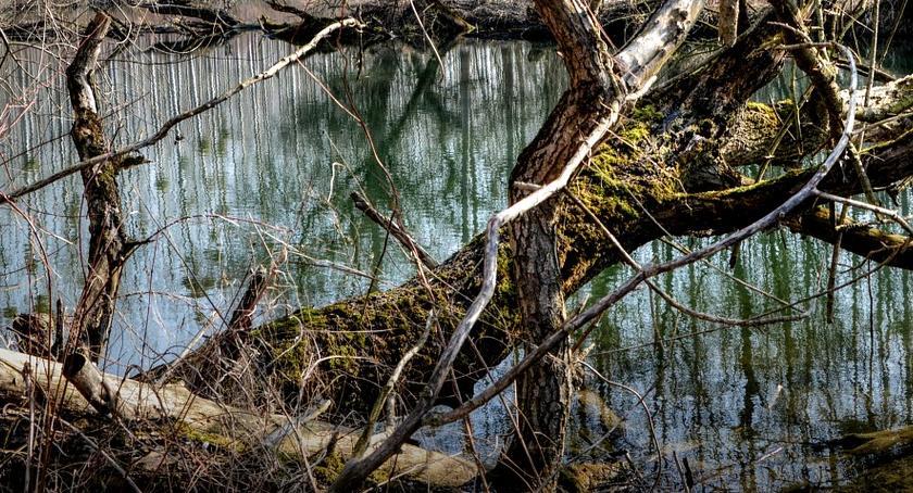 , Wyłowiono ciało mężczyzny jeziorka Ursynowie - zdjęcie, fotografia