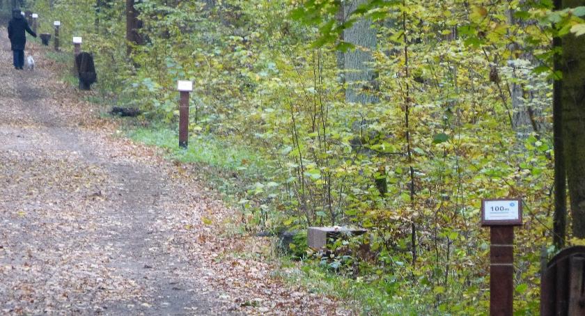Bieganie, Oznakowane trasy biegowe Lesie Kabackim można biegać - zdjęcie, fotografia