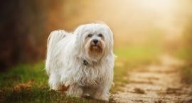 UWAGA Truciciele psów na Ursynowie