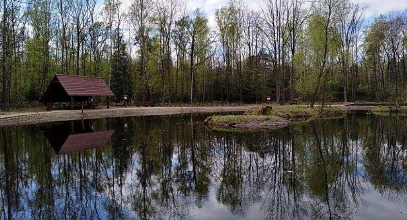 Zieleń, Oczko wodne Lesie Sobieskiego miejsce relaksu Wawrze - zdjęcie, fotografia