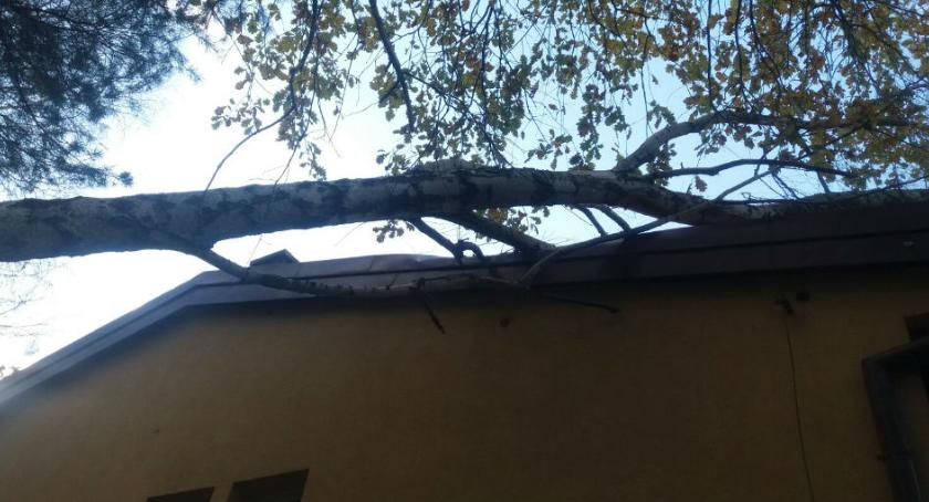 Bezpieczeństwo, Orkan Grzegorz oszczędził Wawra Drzewo powalone budynek [ZDJĘCIA straży] - zdjęcie, fotografia