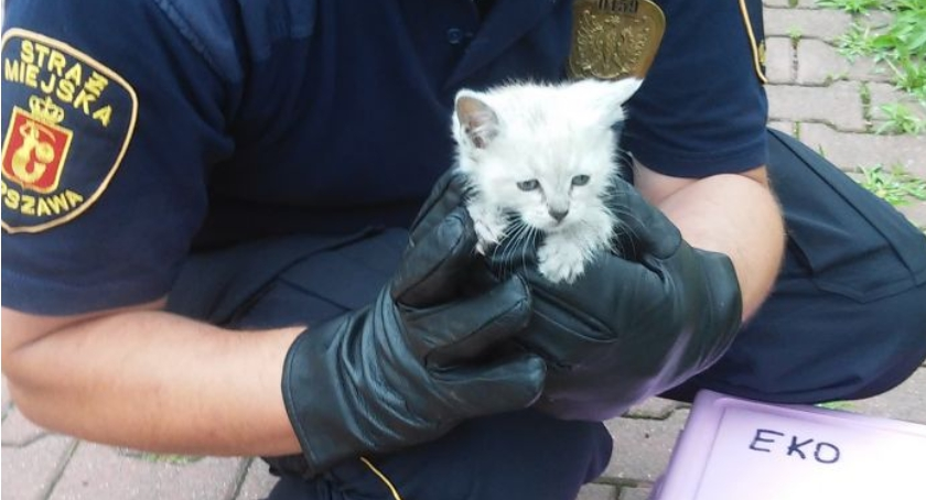 Zwierzęta, Patrol uratował małego kotka - zdjęcie, fotografia