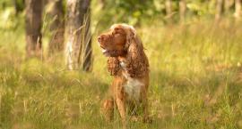 Psie spacery na Marysinie - razem raźniej i weselej. Dołączycie?
