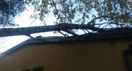Orkan Grzegorz nie oszczędził Wawra. Drzewo powalone na budynek [ZDJĘCIA straży]