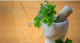 Dzikie rośliny jadalne i lecznicze - ciekawe warsztaty na Romantycznej