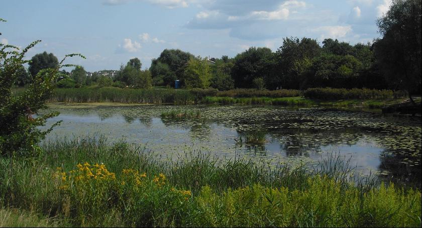 Zieleń, Jezioro Powsinkowskie Perła wilanowskiej przyrody - zdjęcie, fotografia