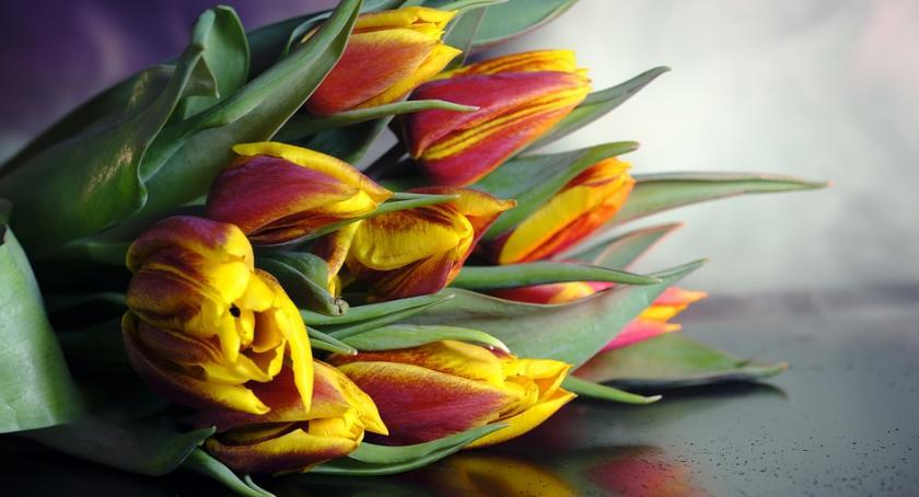 Wystawy, Wystawa Tulipanów marcu Oranżerii - zdjęcie, fotografia