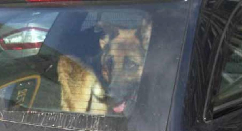 Zwierzęta, czasie upałów pozostawiajmy zwierząt samochodach! - zdjęcie, fotografia