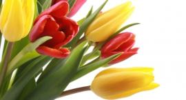 VIII Wystawa Tulipanów
