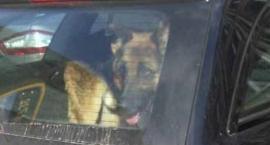 W czasie upałów nie pozostawiajmy zwierząt w samochodach!