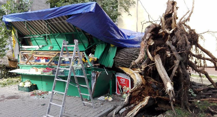 Bezpieczeństwo, Drzewo powalone warzywniak Właściciel cudem ucierpiał - zdjęcie, fotografia
