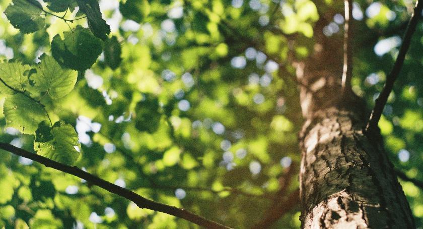 Zieleń, drzewa wycięcia - zdjęcie, fotografia