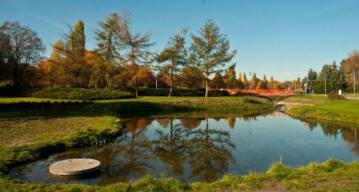 Zieleń, Szymańskiego jesienną porą [FOTO] - zdjęcie, fotografia